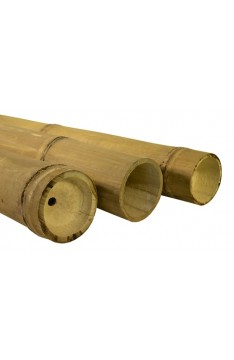 Petung bamboo poles 170/220mm 7mtrs