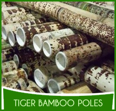 Tiger Bamboo Poles (2)
