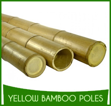 Yellow Bamboo Poles (10)