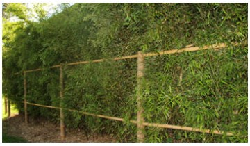 Bamboo pergola, decked area and bamboo tree supports
